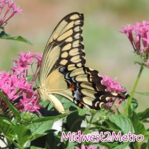 2014 - 12 - 31 - Butterfly